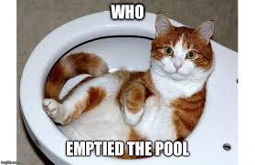 Funniest Cat Meme - funny cat memes imgflip