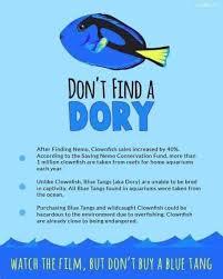 Finding Nemo Meme - dopl3r com memes dont find a dory after finding nemo