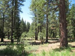 prosser heights homes for sale truckee ca dickson realty pine forest