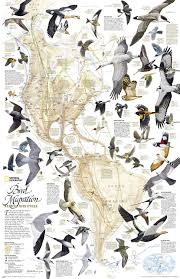 Monarch Migration Map Bird Migration Map Infographics Pinterest Bird Migration And