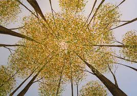 original tree painting look up by giacomelli painting by