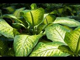 common tropical house plants identification youtube