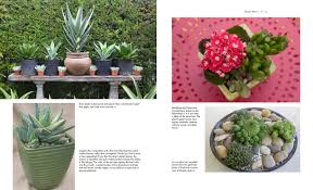 succulent container gardens design eye catching displays with 350