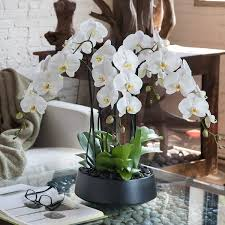orchid arrangements orchid arrangement grandioso black with white orchids orchid
