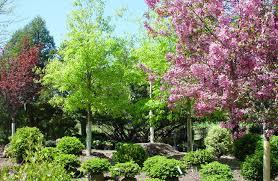 Landscape Nurseries Near Me by Spring Valley Nurseries Landscape Design In Doylestown Pa