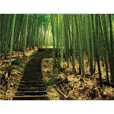 28 bamboo wall murals pro art bamboo path full wall mural 28 bamboo wall murals pro art bamboo path full wall mural