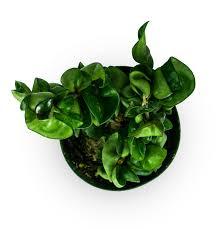 suitable terrarium plants h u2013 the frog lady