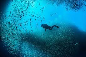what is the maximum safe ascent rate for scuba diving