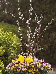 All Year Flowering Shrubs - 303 best shrubs images on pinterest gardening plants and garden