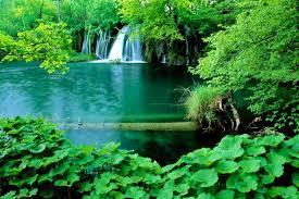 falling waterfall water trees nature green lovely fall leaves