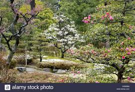 bonsai trees spring at kenrokuen gardens kanazawa japan widely