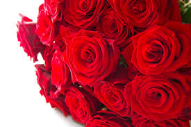 nature valentines love red rose flowers nature roses
