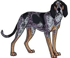 bluetick coonhound fun facts black star kennels free online dog game