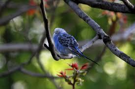 summer in the city bird canada