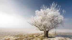 white trees hd wallpaper 1778895