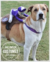 Big Dog Halloween Costume 53 Funny Dog Halloween Costumes Cute Ideas Pet Costumes