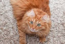 My Cat Peed On My Bed 10 Ways To Stop Your Cat Outside The Litter Box Petmd