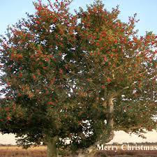 christmas tree personalised flower greeting cards