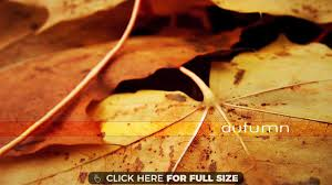 cute baby boy autumn leaves wallpapers page 2 of leaves wallpapers and desktop backgrounds