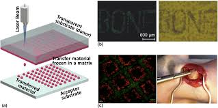 laser assisted biofabrication in tissue engineering and