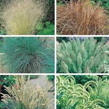 ornamental grasses seed collection from mr fothergill s seeds and