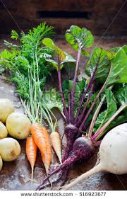 Green Root Vegetables - root vegetables stock images royalty free images u0026 vectors