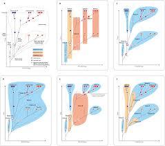 the fossil osmundales royal ferns u2014a phylogenetic network