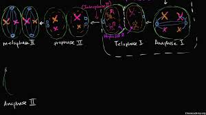 mitosis and meiosis article cells khan academy