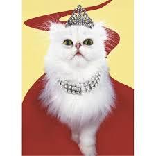 Cat Birthday Cards Greeting Cards Birthday Humorous