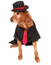 Female Dog Halloween Costumes Costumes Dogs Ebay