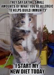 Meme Blender - blender cat imgflip