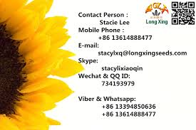 china biggest company of sunflower seed 5009 24 64 with long type