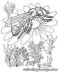 beetles and insects free coloring pages for kids