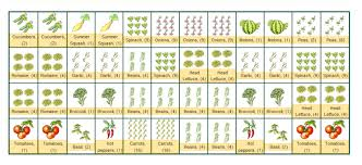 Companion Planting Garden Layout Chic Companion Vegetable Garden Layout Companion Vegetable Garden