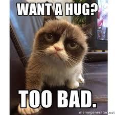 Cat Hug Meme - free hugs cat meme cat 28 images embedded image permalink i