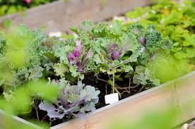Us Zones For Gardening - what planting zone do i live in learn what the usda planting
