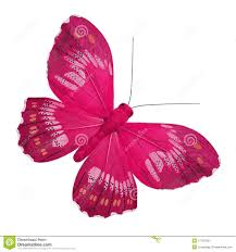 pink butterfly stock images 20 191 photos
