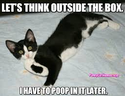 Black Box Meme - black and white kitten meme funny cat memes