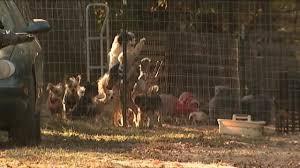 9 investigates backyard breeder regulations face new battle in nc
