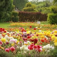 Spring Flower Garden Iran Birds And Flower Gardens Of Isfahan Tripadvisor