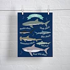 i love sharks wall art land nod