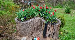 7 flower plants lawn ornaments ideas from the tree stumps
