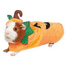 Hamster Halloween Costumes Small Pet Costumes Guinea Pigs U0026 Bunnies Petsmart