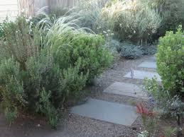native woodland plants chickadee gardens xera plants the silver garden