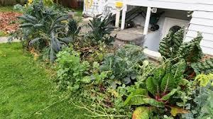 the garden website com amanda u0027s garden website blog