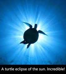 barbados sea turtle project home facebook