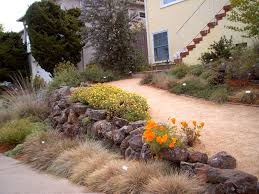 california native plants landscaping landscaping is easy