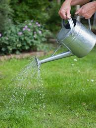 tips for watering and feeding your lawn hgtv