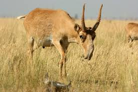 the 10 best horns in the animal world the definitive list