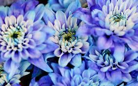 Nice Flowers Nice Flowers 11 Trufflepig